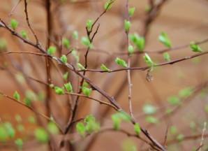 Plantes 8941