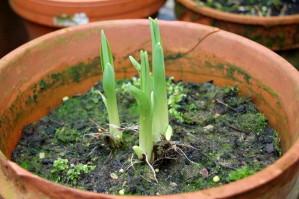 Plantes 8943