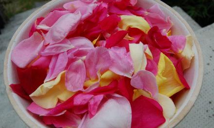 La saveur du parfum des roses