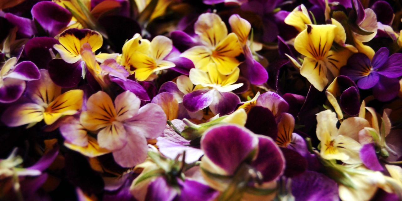 Flower power ou l'incroyable pouvoir des fleurs