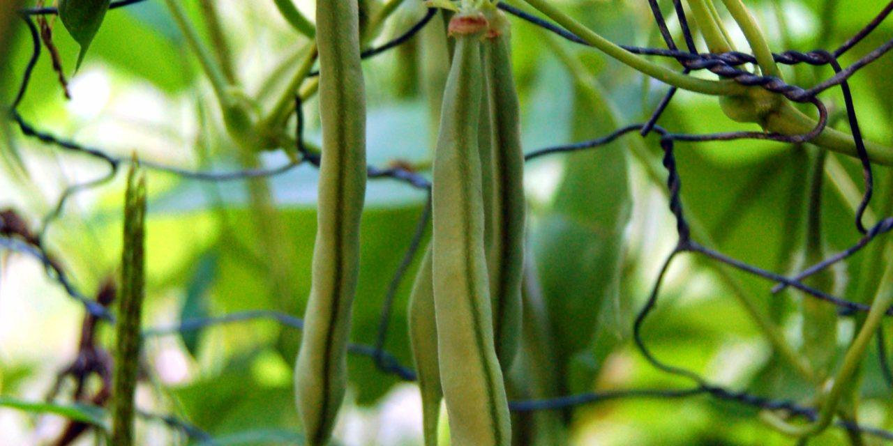 Nos effets d'été – épisode 1 – le tipi de haricots